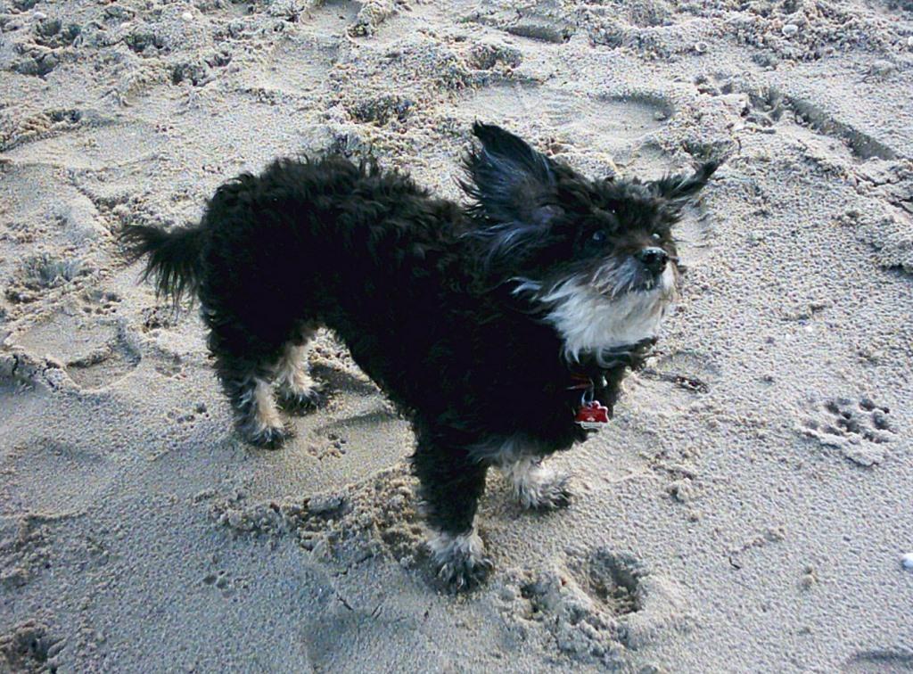 Sich am Strand den Wind um die Ohren wehen lassen!
